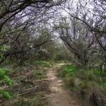 camino cerro